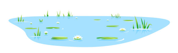 Small pond with bulrush plants isolated Small blue decorative pond with bulrush plants and white water lilies isolated, lake plants nature landscape fishing place, decorative pond in landscape design garden pond stock illustrations