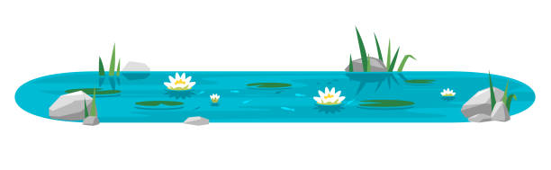 small pond with water lilies in flat style - pond stock illustrations