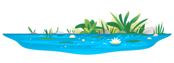 small pond with water lilies - pond stock illustrations