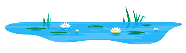 small pond with water lily - pond stock illustrations