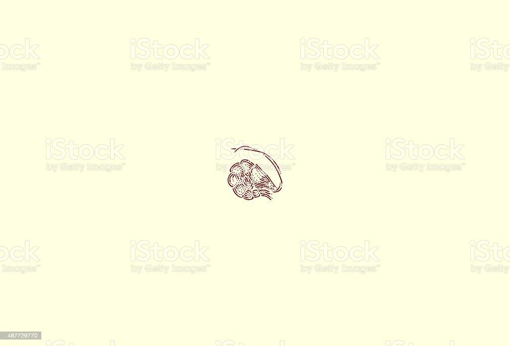 Small shrimp vector art illustration