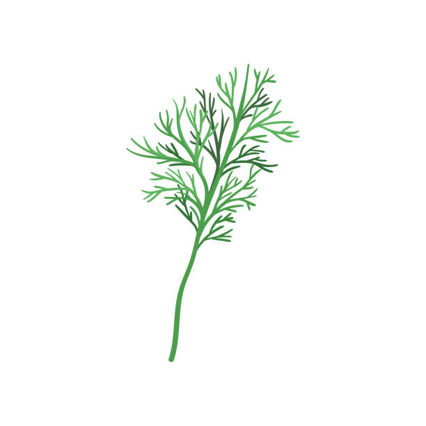 Small sprig of fresh green dill. Aromatic annual herb. Natural and healthy ingredient for flavoring dishes. FFlat vector icon Small sprig of fresh green dill. Aromatic annual herb. Natural and healthy ingredient for flavoring dishes. Decorative element for recipe book. Flat vector illustration isolated on white background. dill stock illustrations
