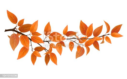 Small tree branch with red autumn leaves. Vector realistic  nature elements for decoration card and design floral frame. Isolated on white background.