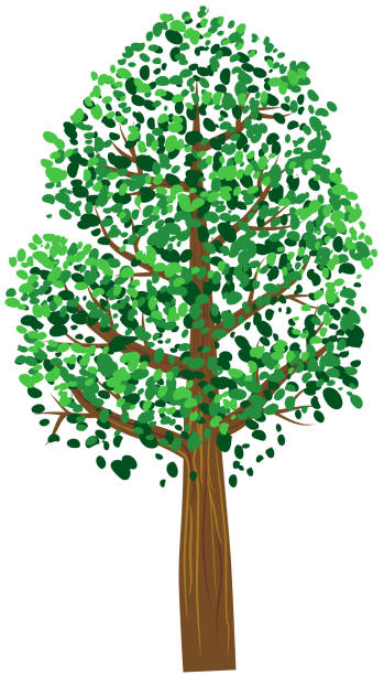 Small tree with green leaves vector vector art illustration