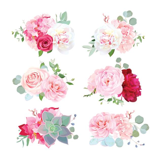Small wedding bouquets of peony, hydrangea, camellia, rose, succ Small wedding bouquets of white and burgundy red peony, pink hydrangea, camellia, rose, succulents, eucalyptus. Birthday party flowers. Vector design set. All elements are isolated and editable. bunch stock illustrations