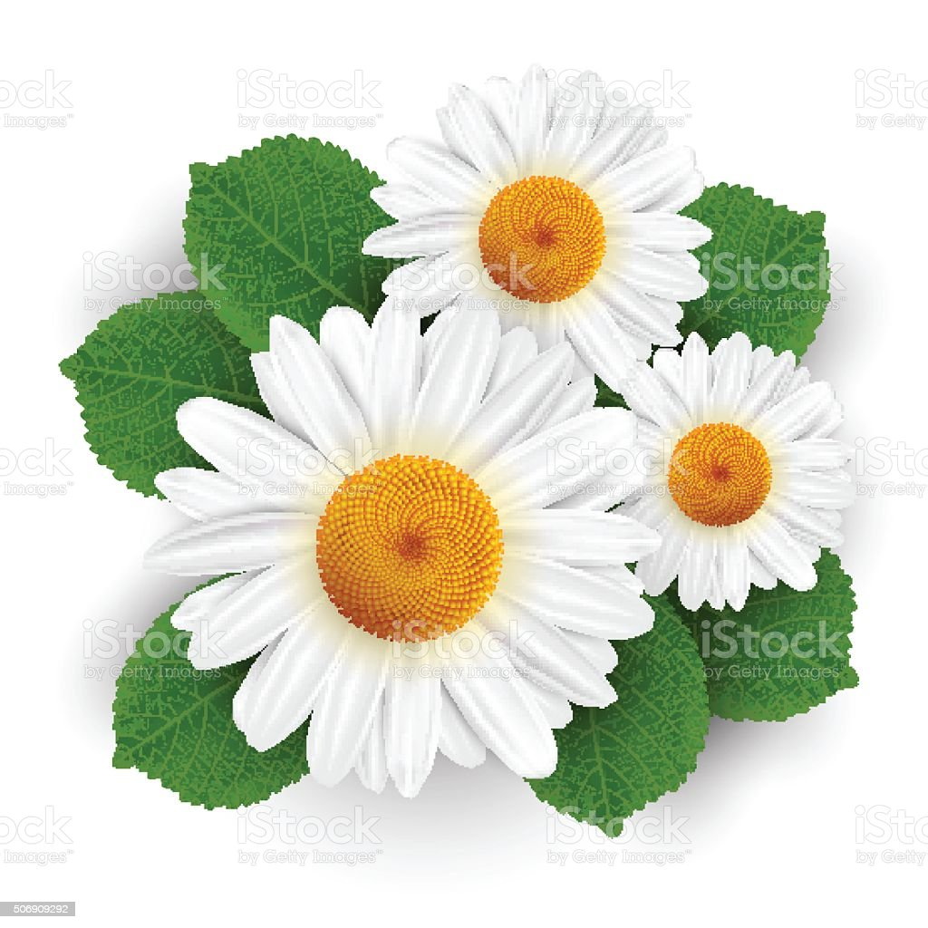 Small white flowers and leafs isolated vector art illustration