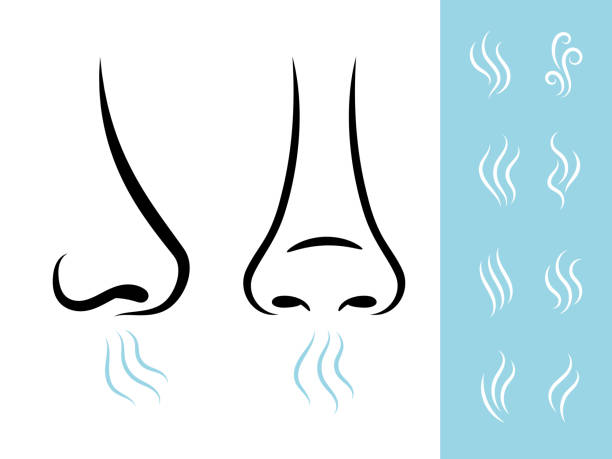 Smell icons with human nose Smell icons with human nose and air. Breathing and aroma vector icons set scented stock illustrations