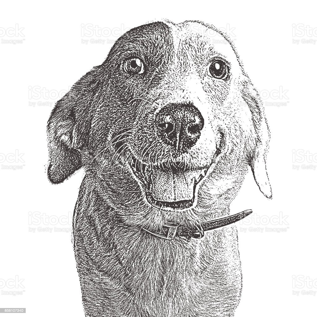 Smiling Border Collie waiting to be adopted. Mixed-breed dog. vector art illustration