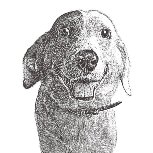 lächelnde border collie warten angenommen werden. mischlingshund. - collie stock-grafiken, -clipart, -cartoons und -symbole