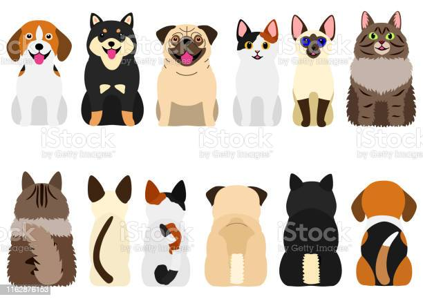 Smiling cute dogs and cats set vector id1162876153?b=1&k=6&m=1162876153&s=612x612&h=2kdksy0rjqxgkprm82kfu6vnk4d1acykd6uqa4qnogy=