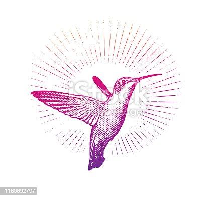 Smiling Ruby Throated Hummingbird