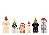 smiling small dogs with Christmas party hat.