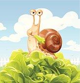 Snail Eating Salad