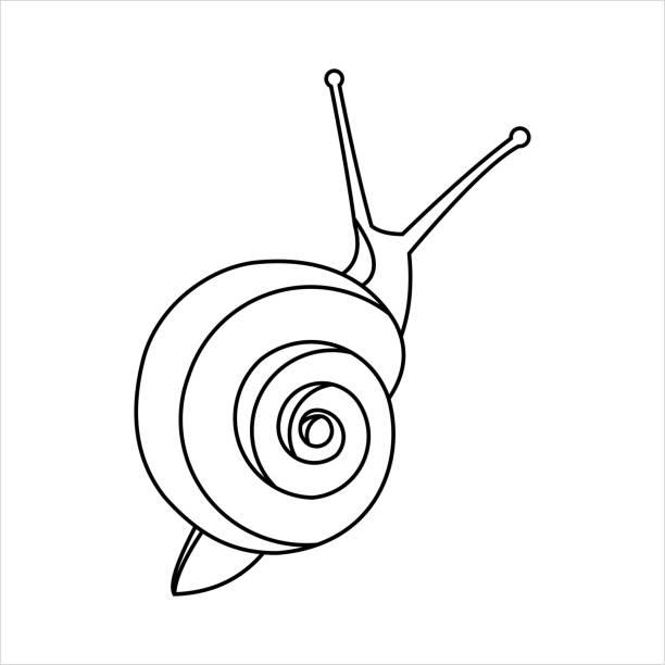 stockillustraties, clipart, cartoons en iconen met slak voor kleurboek voor kinderen en volwassenen, bovenaanzicht. symbool van traagheid. moderne platte vector illustratie op witte achtergrond. - slak