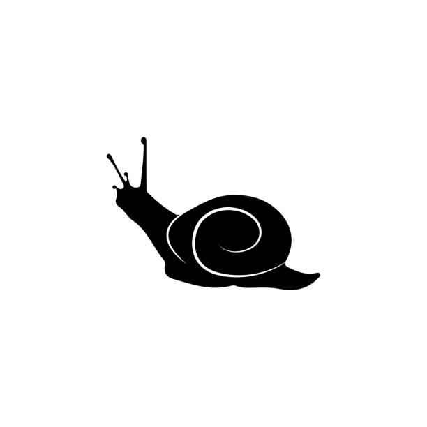 snail icon. elements of world of insects icon for concept and web apps. illustration  icon for website design and development, app development. premium icon - snail stock illustrations