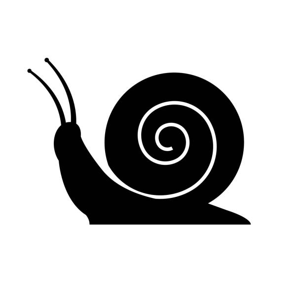 snail icon on white background - snail stock illustrations