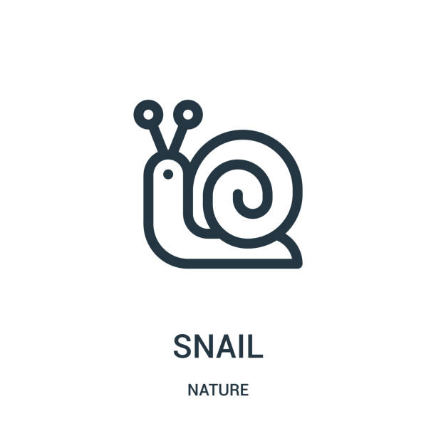 snail icon vector from nature collection. thin line snail outline icon vector illustration. linear symbol for use on web and mobile apps, logo, print media. - snail stock illustrations