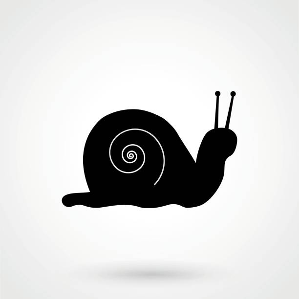 snail icon - snail stock illustrations