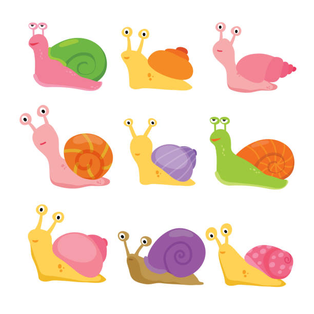 snail vector collection design - snail stock illustrations
