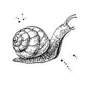 Imagen gratis: Concha, molusco, caracol, anima