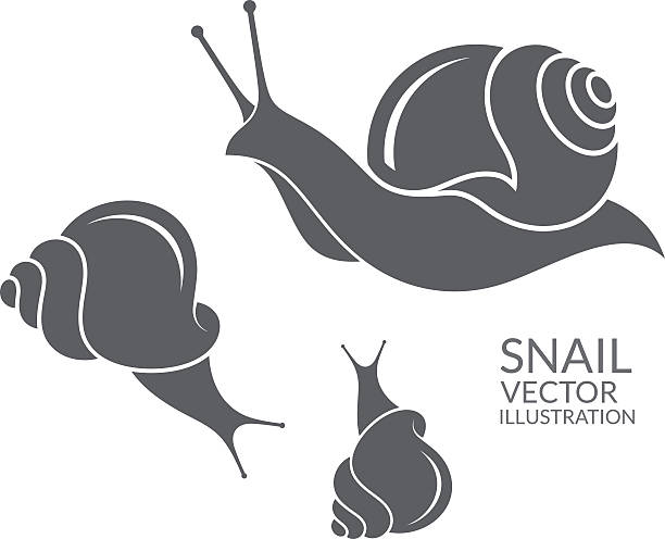 snail - snail stock illustrations