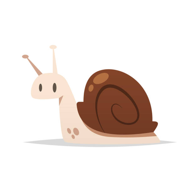 snail vector isolated illustration - snail stock illustrations
