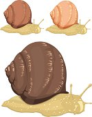three snails. isolated vector file, easy to use.