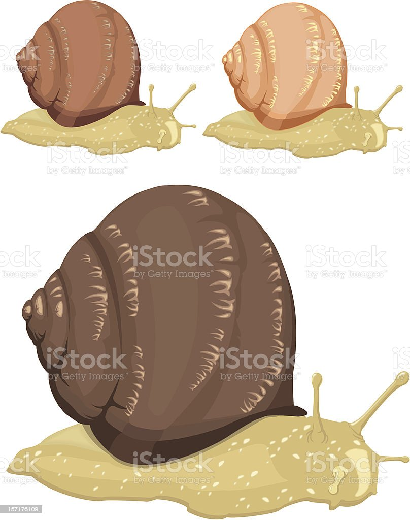 snails vector art illustration