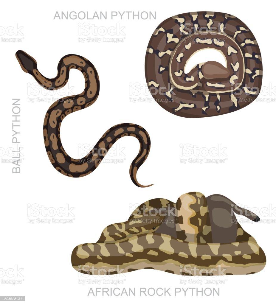 Snake African Python Set Cartoon Vector Illustration vector art illustration