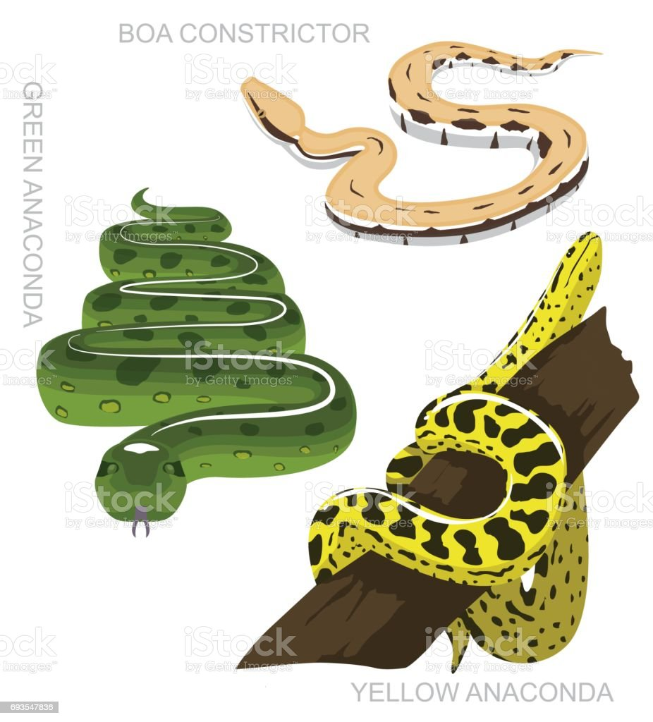 Snake Anaconda Set Cartoon Vector Illustration vector art illustration