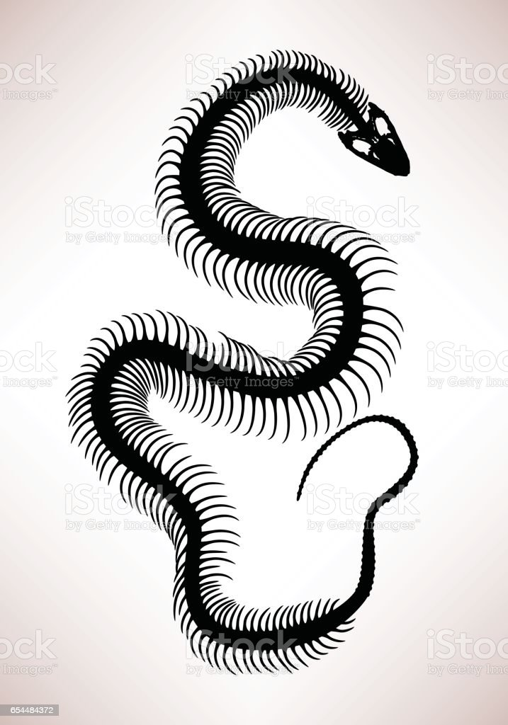 Snake Bone Skeleton vector art illustration