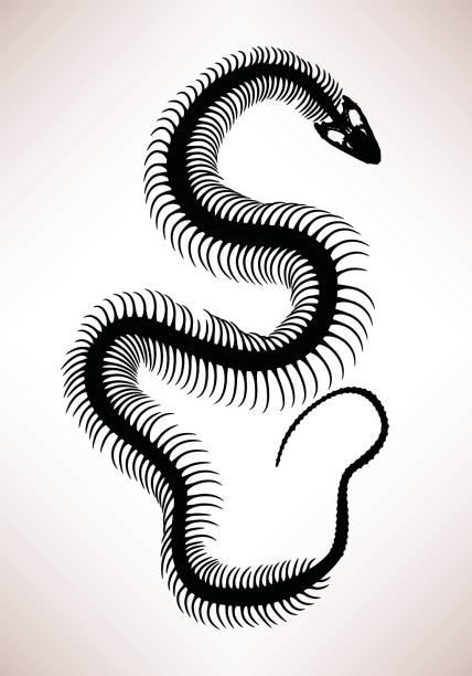 Snake Bone Skeleton vector art illustration