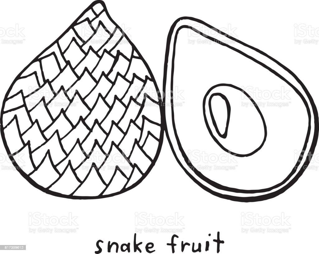 Ilustración de Página Para Colorear De Frutas De La Serpiente Arte ...