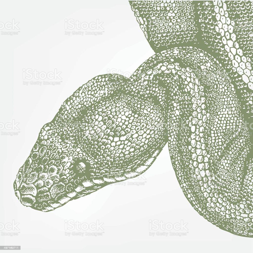 snake head green boa vector art illustration