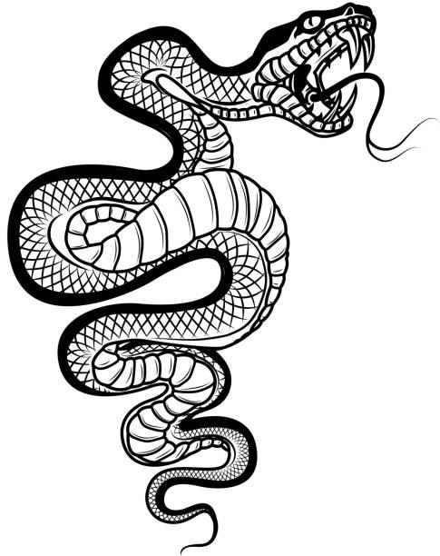 Snake illustration isolated on white background. Viper. Design element for label,emblem, sign, badge. Snake illustration isolated on white background. Viper. Design element for llabel,emblem, sign, badge. Vector illustration snakes tattoos stock illustrations