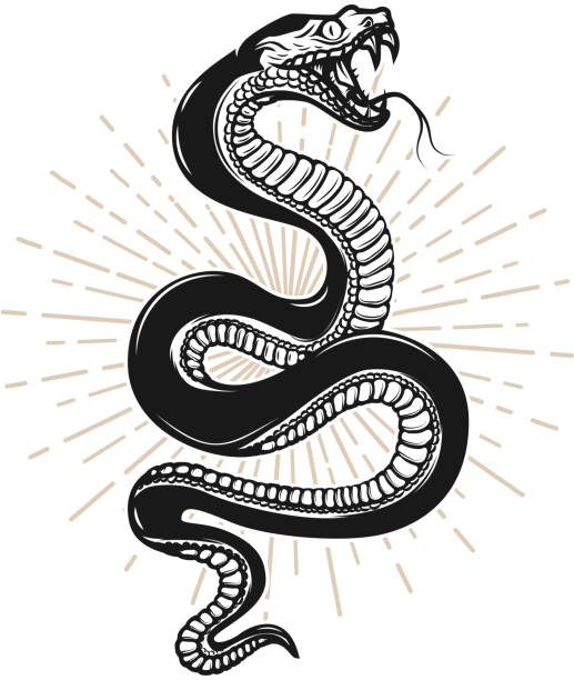 snake illustration on white background. design element for poster, t shirt, emblem, sign. - snakes tattoos stock illustrations, clip art, cartoons, & icons
