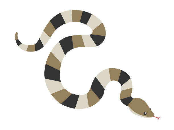 snake illustration. - reptiles stock illustrations
