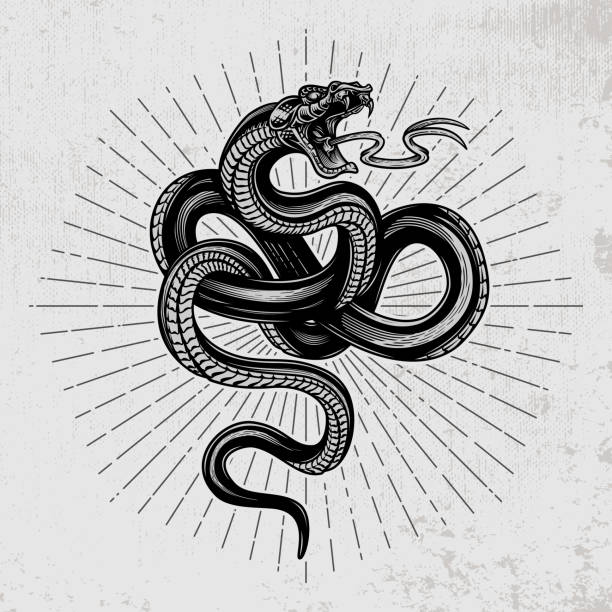Snake poster. Hand drawn vector illustration in engraving technique with star rays on grunge background. snake stock illustrations