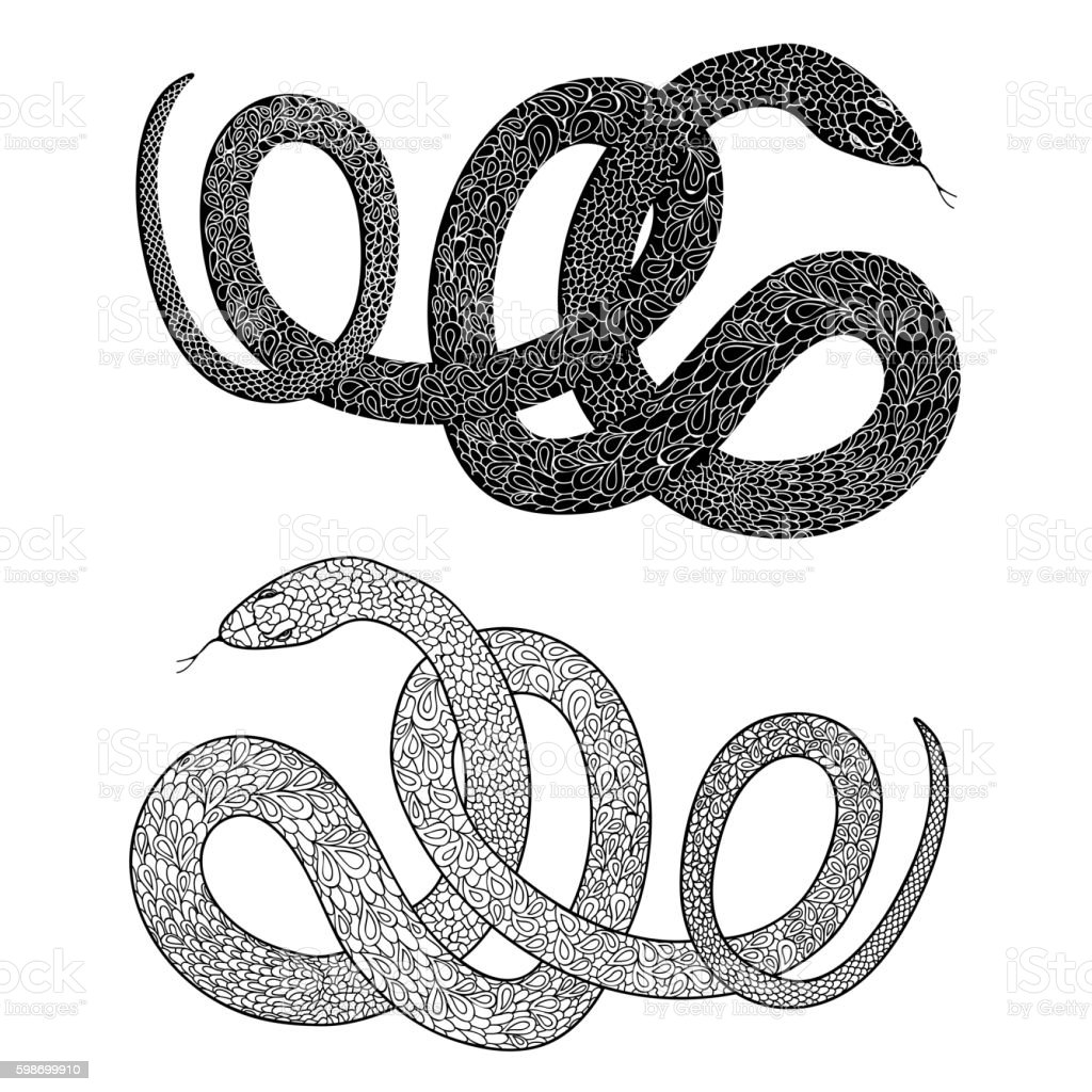 Snake set. Ornamental patterned skin reptile engraved illustraction vector art illustration
