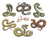 A collection of snake silhouettes including a cobra, python and coral snake.