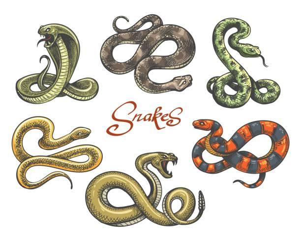 Snake tattoo set Snake tattoo vector. Colored snakes tattoos on white, vintage viper and cobra evil serpent vector illustration snake stock illustrations