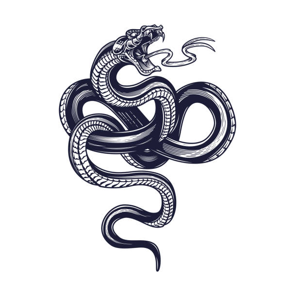 Snake. Vector hand drawn illustration of snake in engraving technique isolated on white background. Occult poster, t-shirt print, cover. snakes tattoos stock illustrations