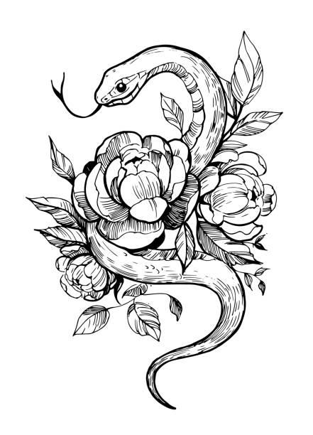 ilustraciones, imágenes clip art, dibujos animados e iconos de stock de serpiente con flores. ilustración dibujada a mano convertida en vector. ideal para impresiones en una camiseta, boceto de tatuaje. - tatuajes de serpientes
