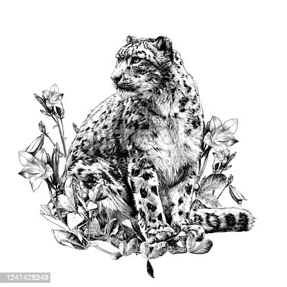 snow leopard animal sitting at full height and looking sideways composition decorated with bell flowers and leaves, sketch vector graphics monochrome illustration on a white background