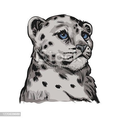 istock Snow leopard baby tabby portrait in close up isolated sketch. Vector spotted leopard hand drawni llustration of Panthera uncia. Mammal with thick fur. Uncia wild animal from Feline. Catlike carnivore 1220638688