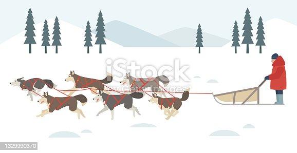 istock Snow sled used by Siberian Husky. 1329990370