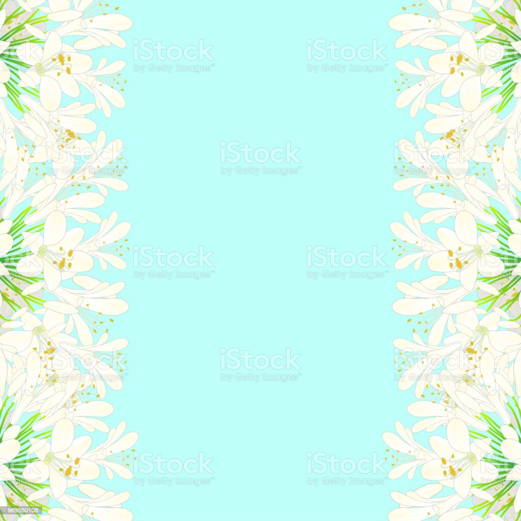Snow White Agapanthus Border - Lily of the Nile, African Lily vector art illustration