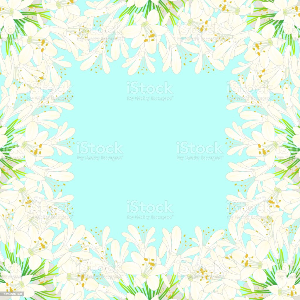 Snow White Agapanthus Border - Lily of the Nile, African Lily2 vector art illustration