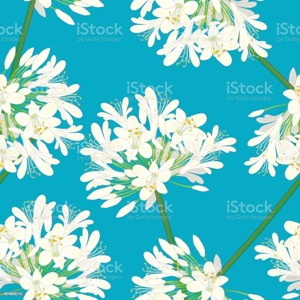 Snow White Agapanthus on Blue Background. Vector Illustration vector art illustration