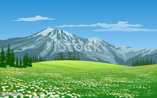 Snow-capped mountain vector image with green meadow and flowers